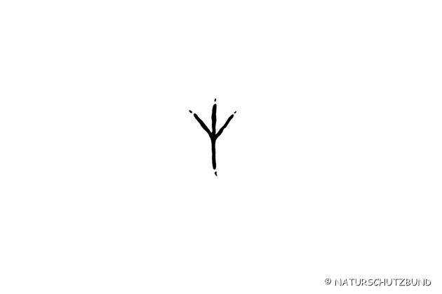 NaturundJagd.at- Trittsiegelquiz Zeichnungen - Das Mühlviertel, Natur